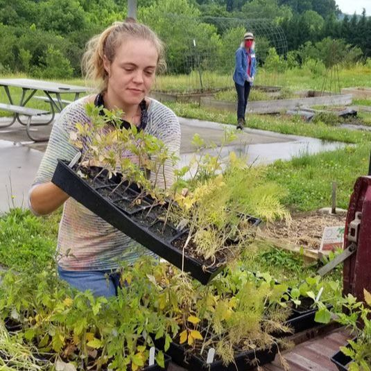 Brandy Richthammer unloads plants from her truck, Friday, May 29, 2020