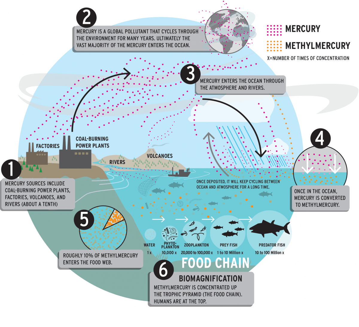 Info graphic showing how mercury moves through the environment Opens in new window